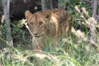 Day 10: Our last Day at Sabi Sands Game Reserve, Kruger