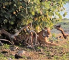 Day 01 at the Land of Tigers – Ranthambore National Park