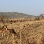 Day 02 : A memorable safari experience at Ranthambore Tiger Reserve